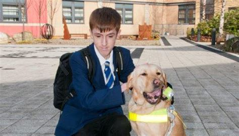 how to guide dogs how to support a pupil getting a guide rnib supporting with sight loss