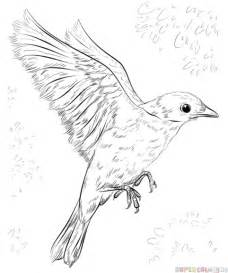 how to draw a blue bird step by step drawing tutorials