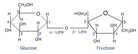 sucrose structural diagram what types of functional groups are present in an amino