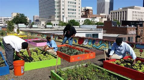 Food Garden City Ga by Task Shelter Producing Pounds Of Veggies On Rooftop