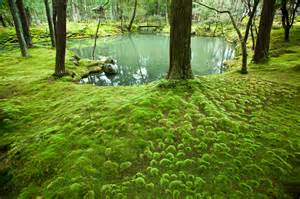 Japanese Zen Garden templos rec 243 nditos de jap 243 n gt gt rumbo al este gt gt blogs el pa 205 s