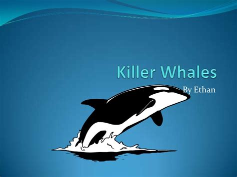 killer themes free download killer whale powerpoint