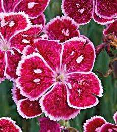 who flowers and plants always want to ut 237 l 237 ze perennial plants from a to z for all your gardening