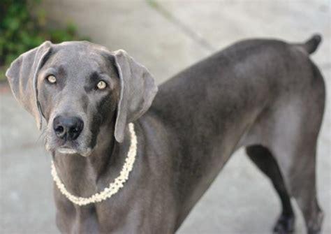 list of smartest dogs 25 worlds smartest breeds wow gallery ebaum s world