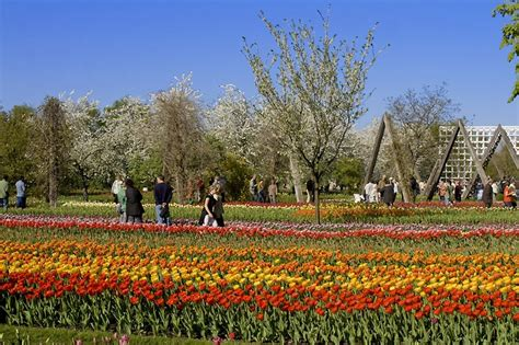britzer garten grillen tulpenschau quot tulipan quot berlin av berichte fotos und