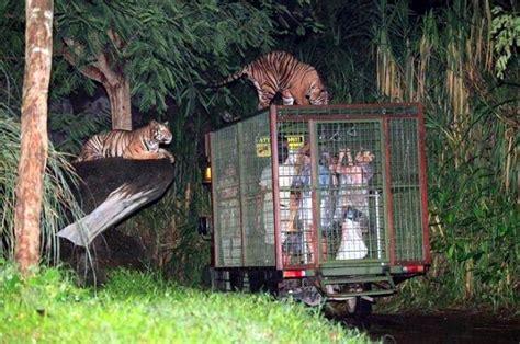 bali safari and marine park bali activity amazing nocturnal encounters at bali safari and marine