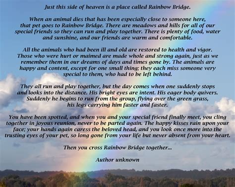 rainbow bridge a forever home rescue foundation in memory