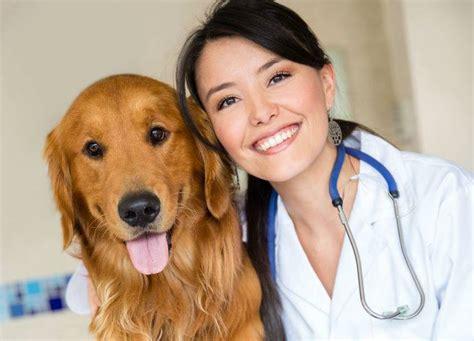 imagenes de medicas veterinarias 8 de julio d 237 a del veterinario blog de derrama