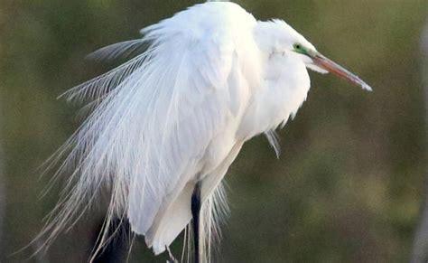 Birds Of New Mexico Audubon New Mexico