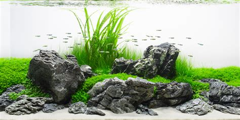 aquascape style understanding iwagumi aquascaping style the aquarium guide