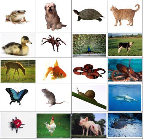 imagenes de animales oviparos viviparos y ovoviviparos actividad para aprender sobre los animales ov 237 paros para