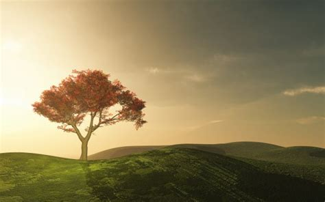 beautiful tree beautiful tree in the countryside photo free