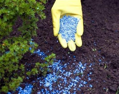 best fertilizer for flower garden best fertilizers for flowers