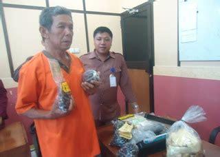 Bibit Kambing Di Bengkulu bibit benih unggul kelapa sawit di bengkulu menjual benih