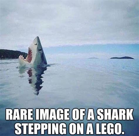 Funny Shark Memes - rare image of a shark stepping on a lego best of funny memes