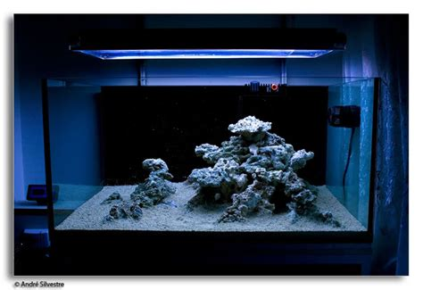 reef aquascaping ideas minimalist aquascaping reef tools