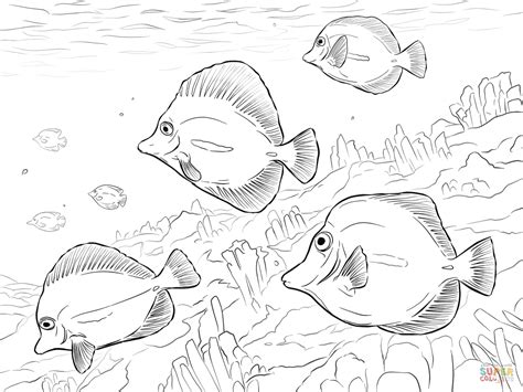 Blue Tang Fish Coloring Page Coloring Pages Fish Blue Fish Coloring Pages