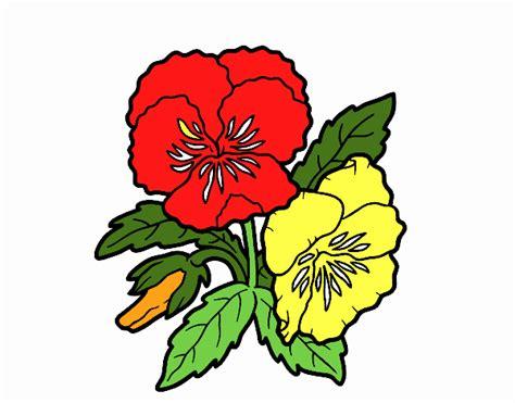 fiori di pensiero disegno fiore di pensiero colorato da utente non