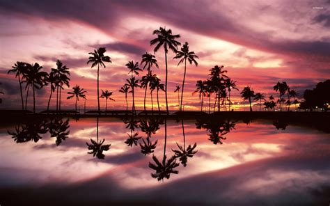Beautiful beach sunset with palm trees www pixshark com images galleries with a bite