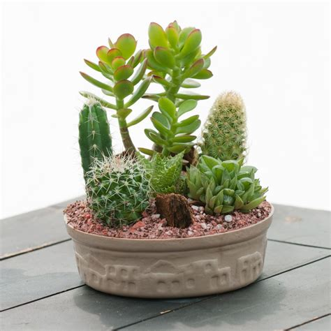 indoor small plants small cactus garden indoor office plants by plant