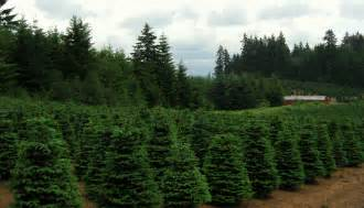 file christmas trees near redland oregon jpg wikimedia