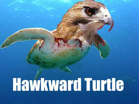 Turtle Meme - hawkward turtle know your meme