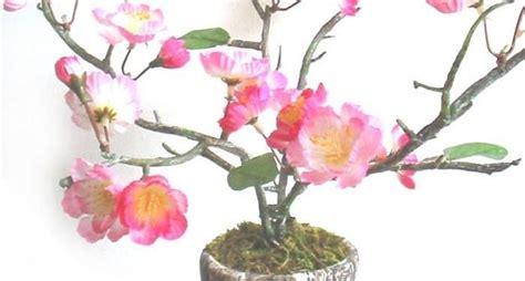 fiore di pesco significato significato fiori di pesco significato fiori