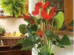 5 plantes d int 233 rieur fleuries faciles