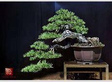 bonsai | Check Your Premises Minoru Bonsai