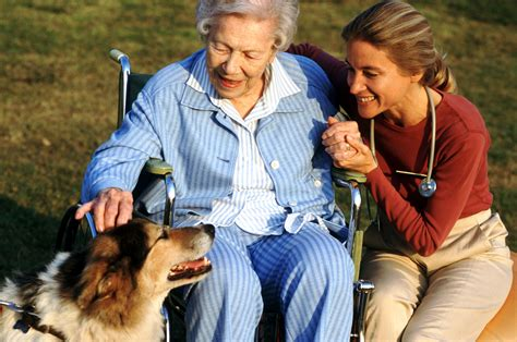 therapy certification animal assisted therapy certification tips