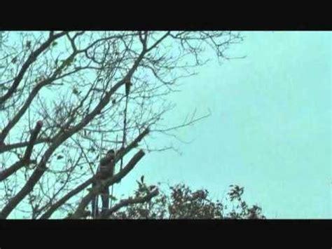 walnussbaum schneiden wann walnussveredlung 2012 der omegaschnitt doovi