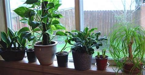 plants to grow indoors 10 best plants to grow indoors for air purification