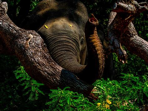 best tours in sri lanka photography tours in sri lanka wildlife photography