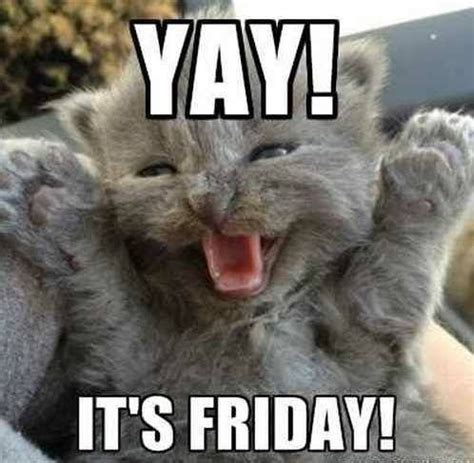 Friday Cat Meme - tgif day s of the week friday pinterest tgif