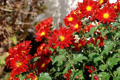 foto fiori piu belli mondo immagini dei fiori pi 249 belli mondo