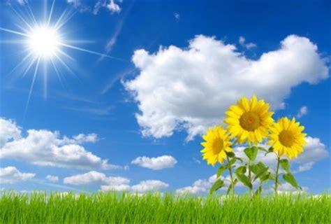 wallpaper bunga full hd langit biru dan bunga matahari hd gambar langit gratis