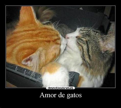 imagenes de amor con gatos gatos con mensajes auto design tech