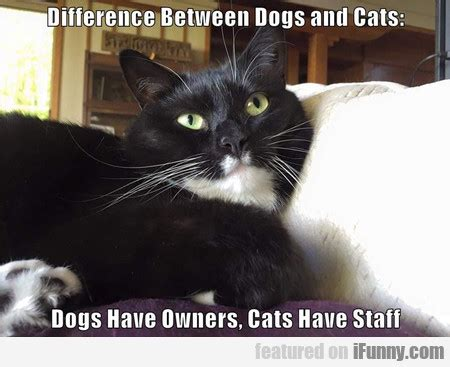 difference between cats and dogs ifunny get your daily dose of ifunny