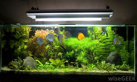 beautiful home fish tanks home fish tanks aquariums