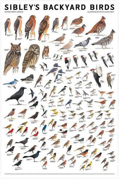 sibley s backyard birds eastern north america by david