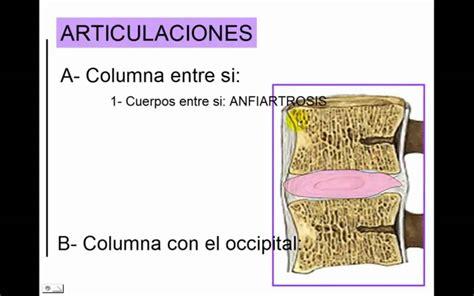 la columna de la 8416771952 articulacion de la columna vertebral youtube