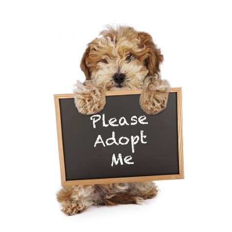 puppy adoption events join the amarillo spca for the pet smart adoption event