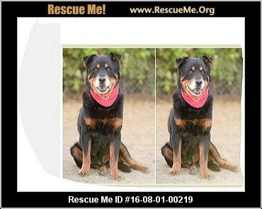 rottweiler rescue in california california rottweiler rescue adoptions rescueme org