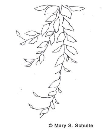 printable vine leaves painting pumpkins and gourds senior activities