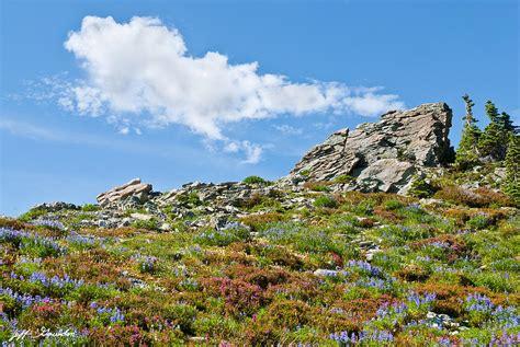 alpine rock garden alpine rock garden photograph by jeff goulden