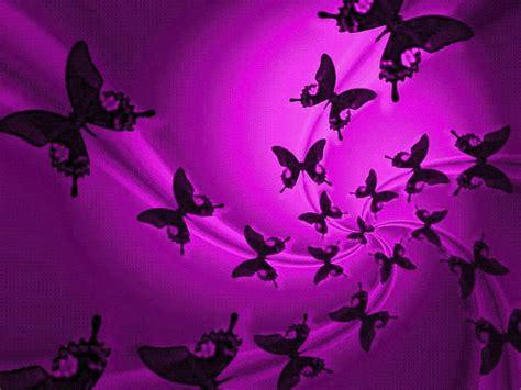 wallpaper background butterfly news butterfly purple butterfly wallpaper