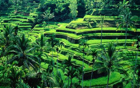 landscape design bali indonesia the 10 most stunning and appealing places anyone should go
