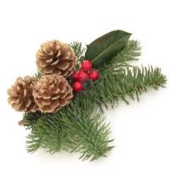 boscobel 183 10914865 christmas decoration of holly berry