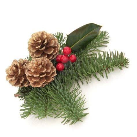 boscobel 183 10914865 christmas decoration of holly berry