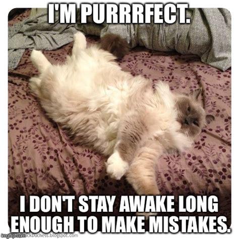 Purrrfect Meme - cats imgflip